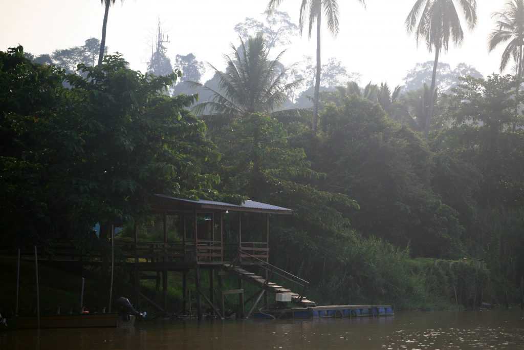 Река Кинабатанган / Kinabatangan River
