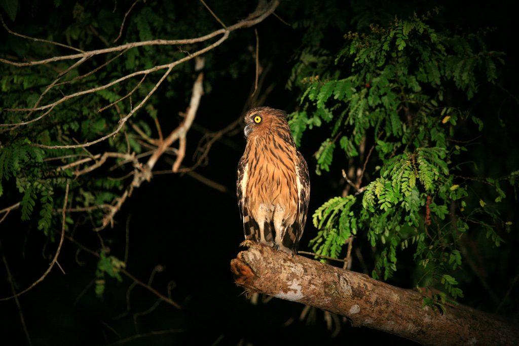 Нощното сафари / Night Safari