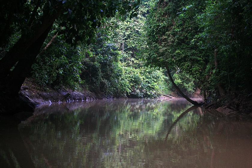 Река Кинабатанган/ Kinabatangan River