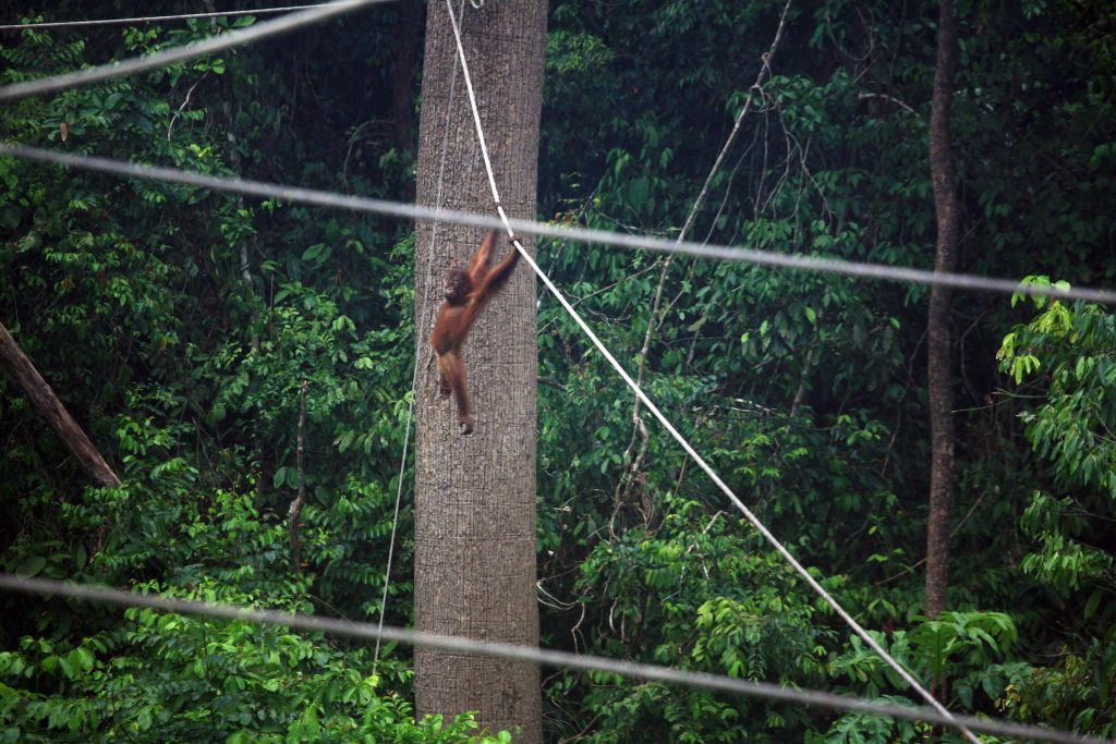 Oстров Борнео / Borneo Island