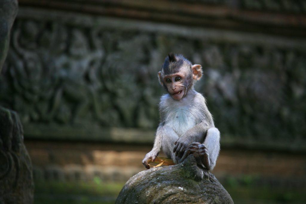 Гората на маймуните Убуд (Ubud Monkey Forest ), Остров Бали, Индонезия, Bali Island, Indonesia