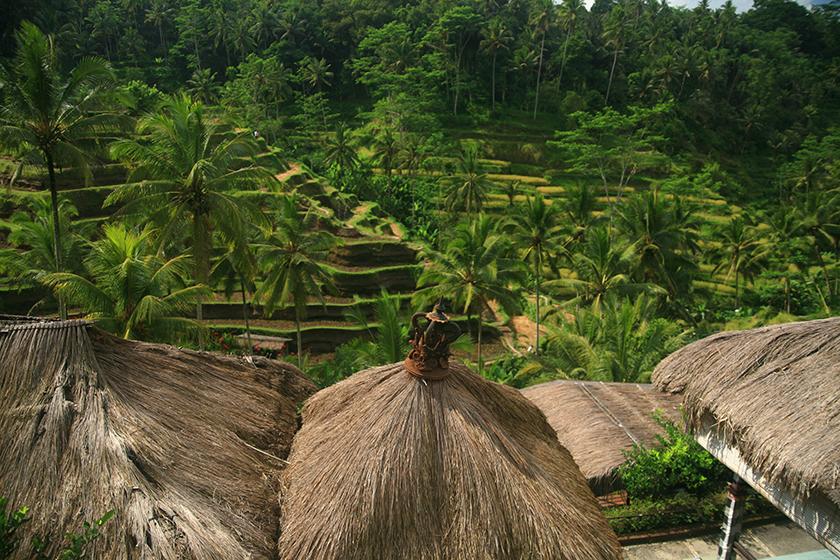 Оризовите тераси Тегалаланг / Tegallalang Rice Terraces