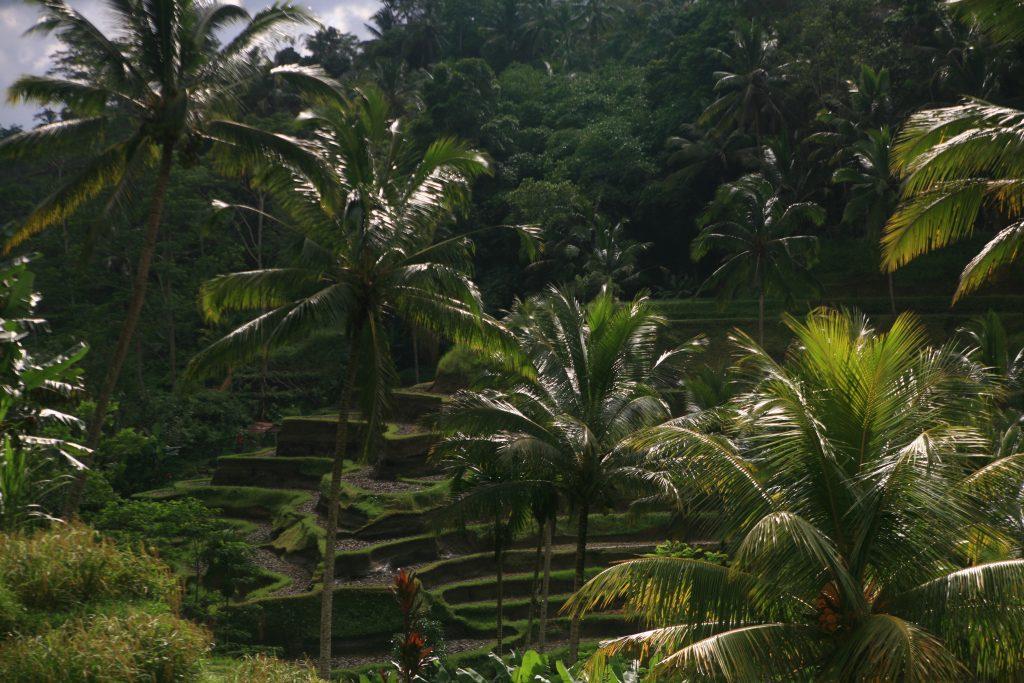 Оризовите тераси Тегалаланг (Tegallalang Rice Terraces), Храмът Гунунг Лебах (Pura Gunung Lebah Temple), Сидеман (Sideman), Остров Бали, Индонезия, Bali Island, Indonesia