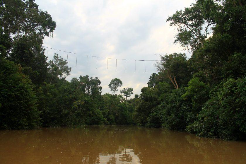 Мост над реката, направен за орангутаните