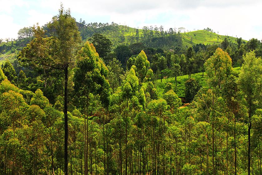 Красивата природа на Нуара Елия (The beautiful nature of Nuwara Eliya)