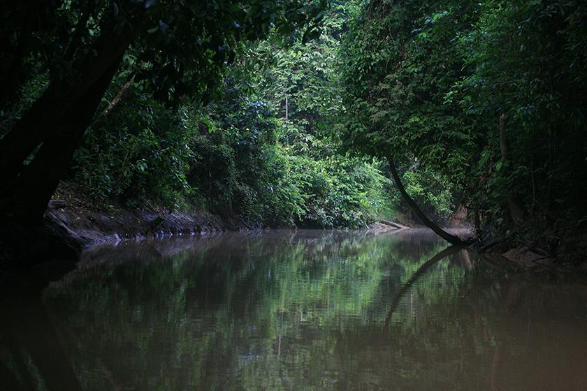 Река Кинабатанган, Борнео / Kinabatangan River, Borneo