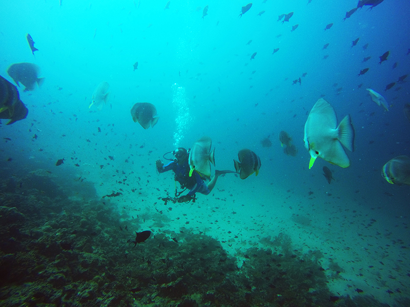 Остров Мадивару, Малдиви/Madivaru Island, Maldives Islands