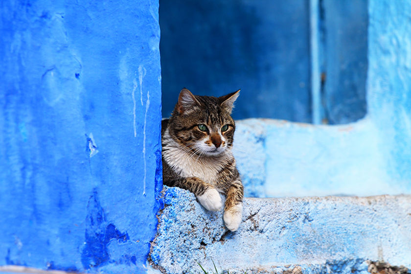 Улиците на Шефшауен / The Streets Of Chefchaouen