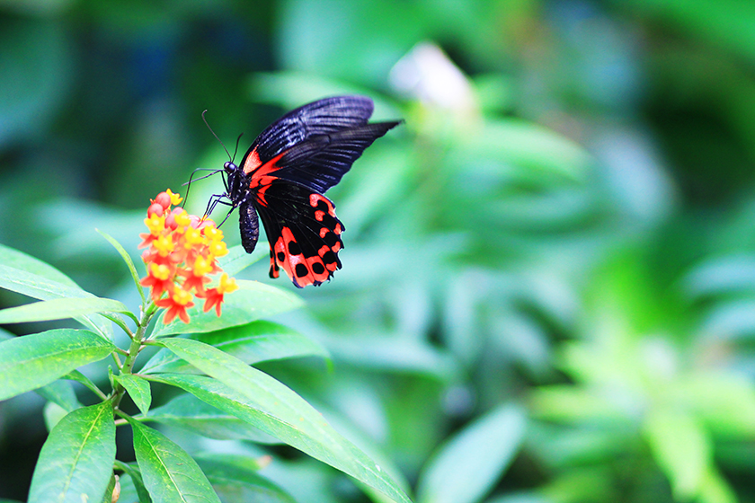 Къщата на пеперудитe / Butterfly House
