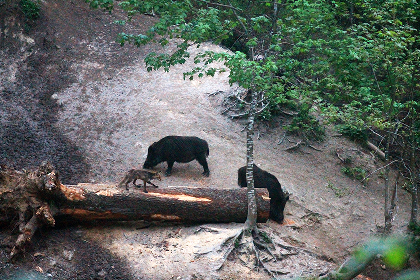 Гориста местност близо до Брашов / Wooded Area Near Brasov