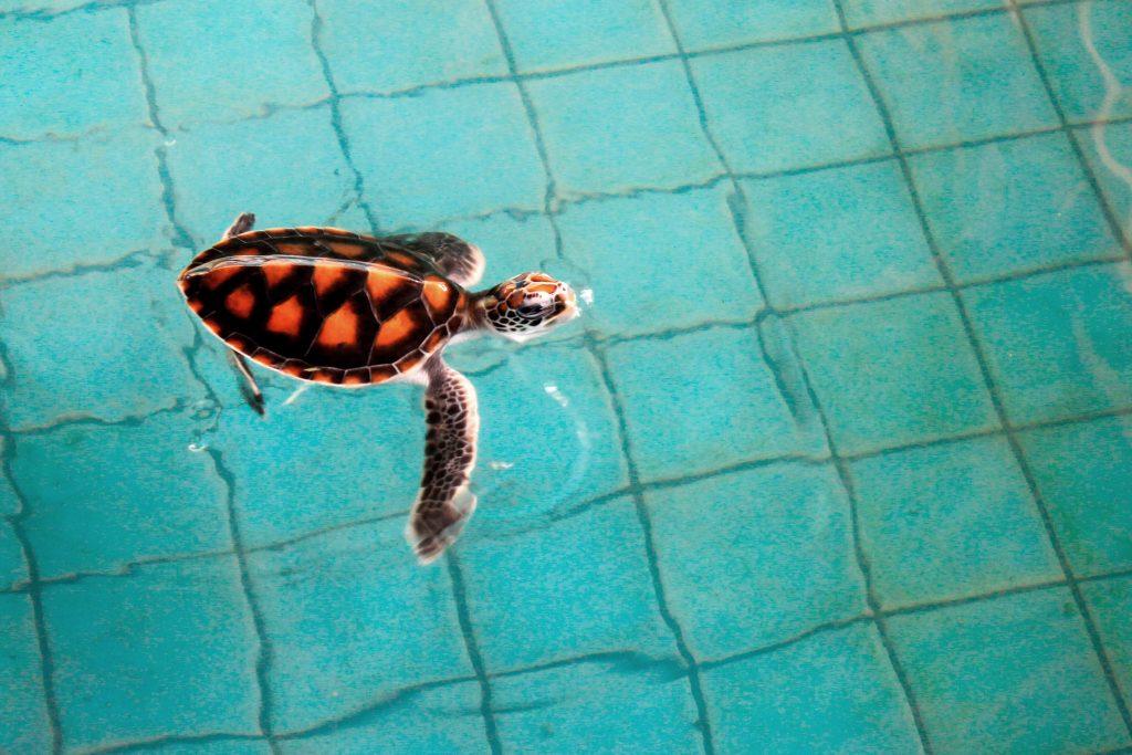 Royal Thai Navy Sea Turtle Conservation Center Phang Nga