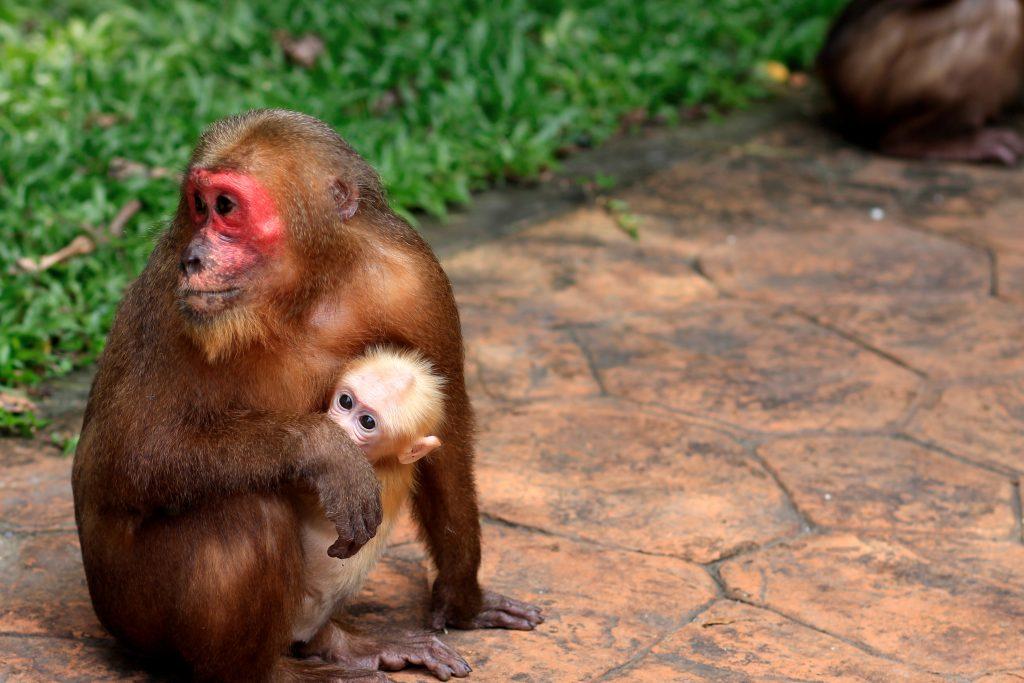 Национален парк Као Сок / Khao Sok National Park