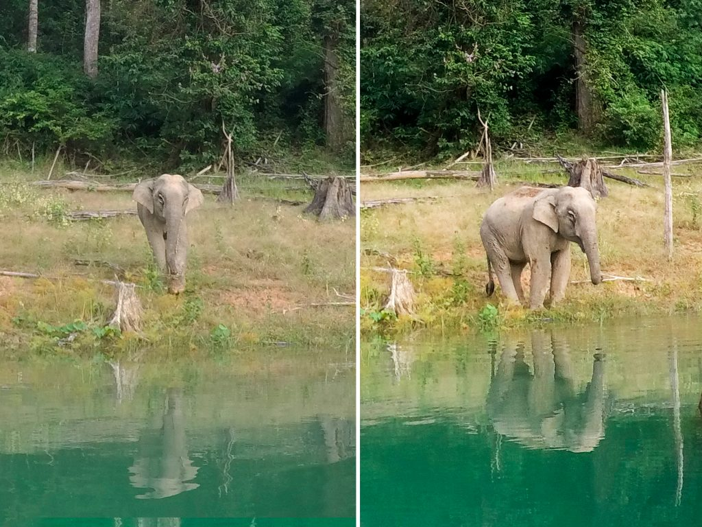 Див слон, езерото Чео Лан / Wild Elephant, Cheow Lan Lake